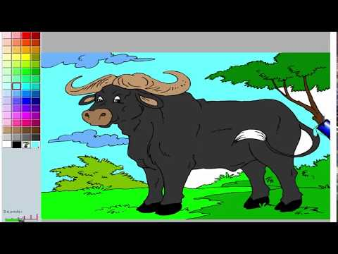 African Buffalo Coloring Pages for Kids to Learn to Color and Paint