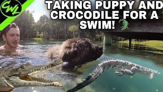 TAKING MY DOG AND CROCODILE FOR A SWIM!!!