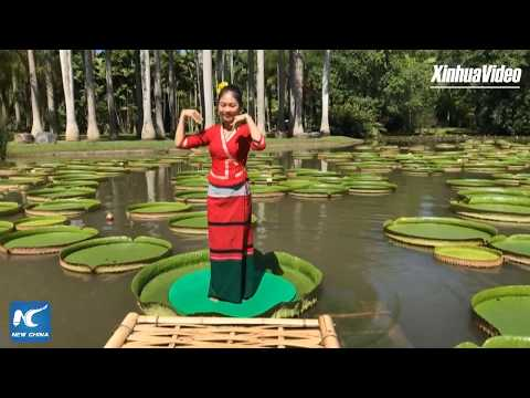 LIVE: Practicing yoga on water lily leaves in Yunnan, China