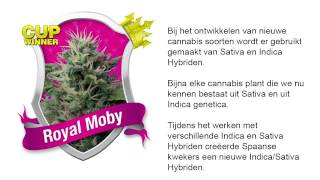 Royal Moby  *Royal Queen Seeds*