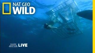 Human Bait | Shark Attack Experiment Live!