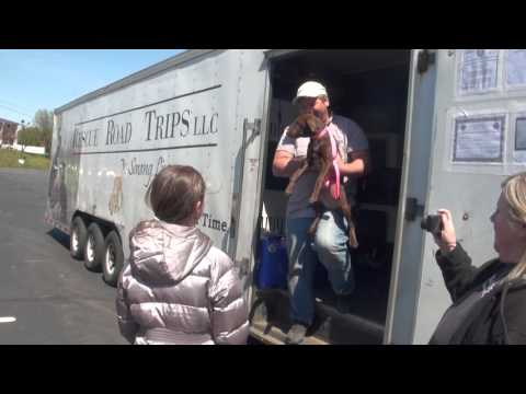 rescue road trips rocky hill ct 4 16 2016 youtube. Black Bedroom Furniture Sets. Home Design Ideas