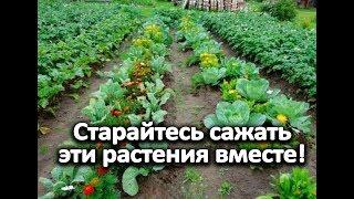 Старайтесь сажать эти растения вместе!
