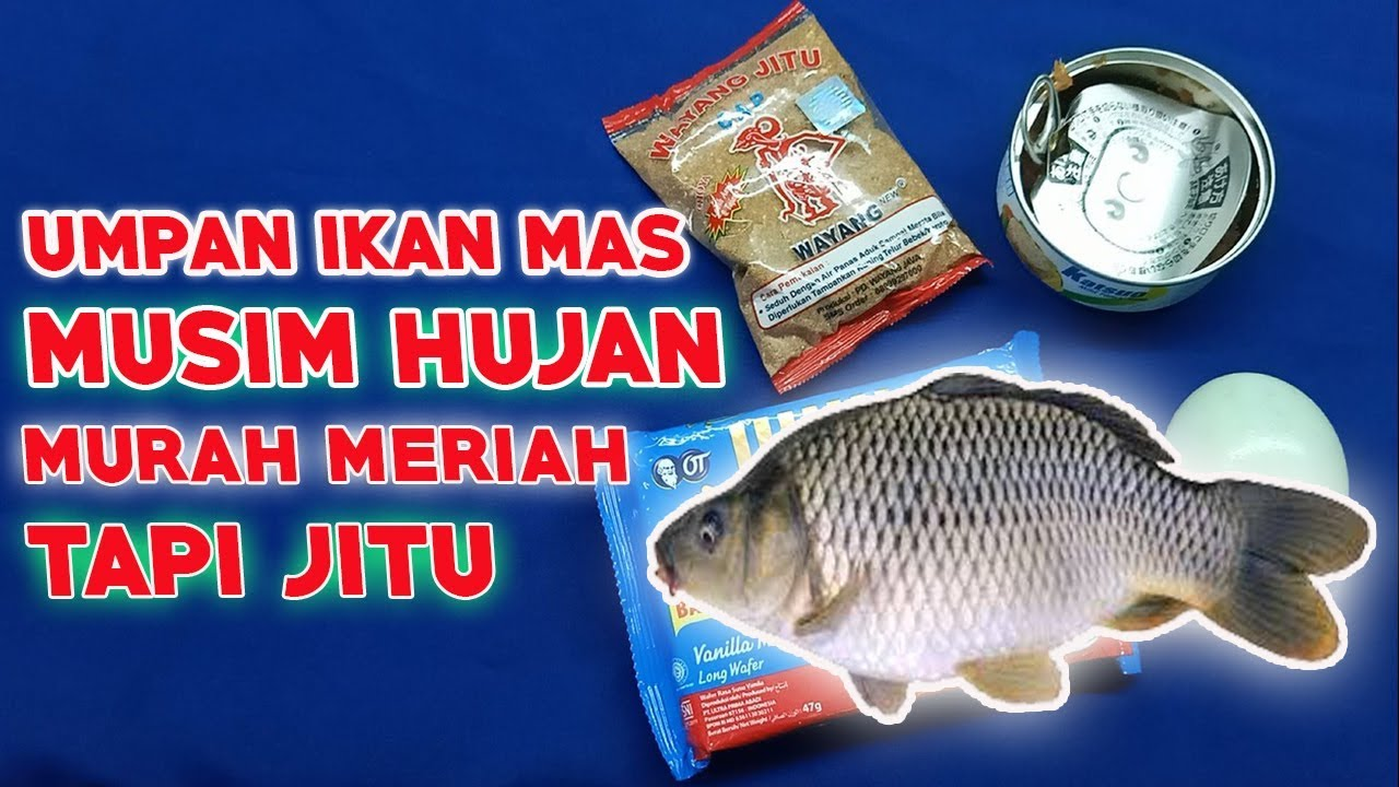 Umpan Ikan Mas Musim Hujan Murah Meriah Tapi Jitu Youtube