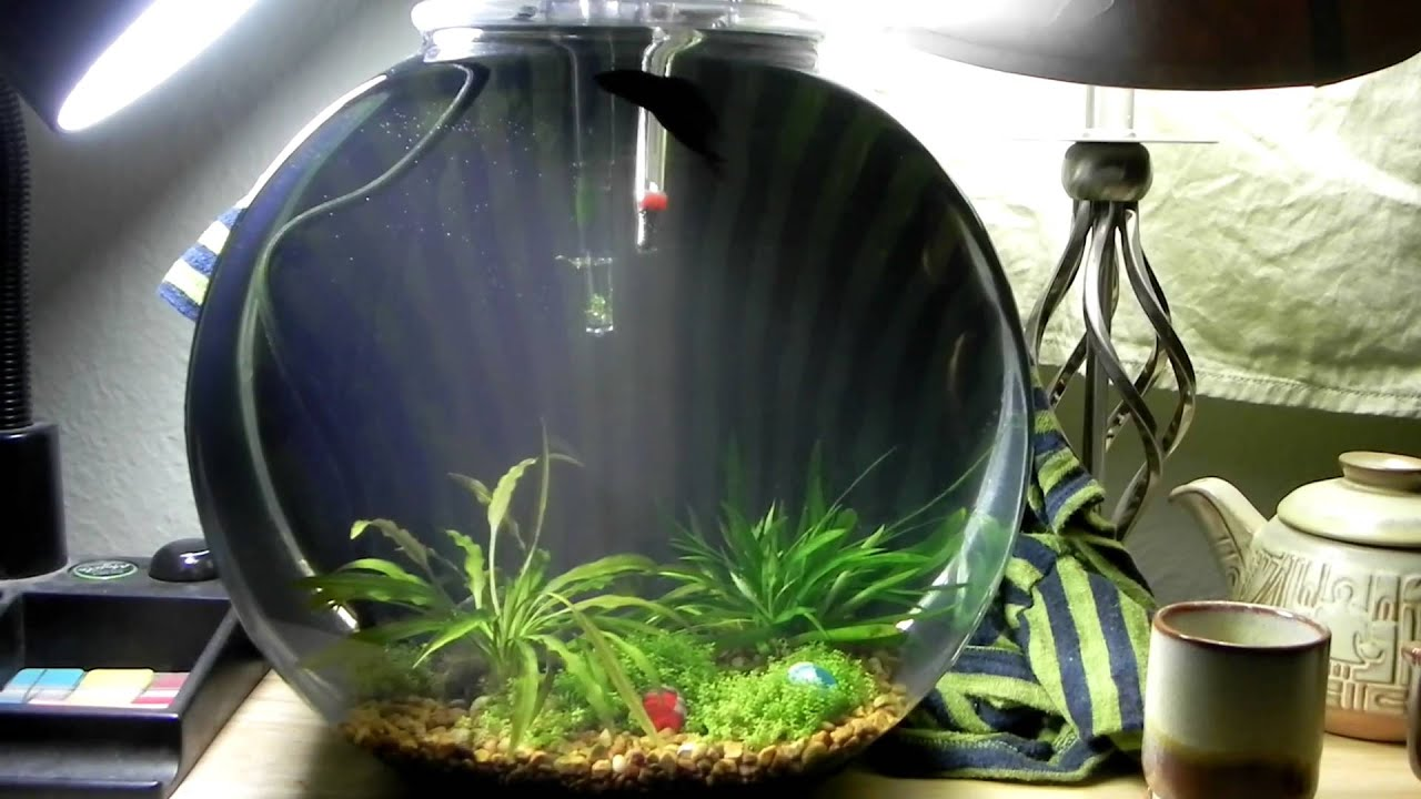Update two 2 5 gallon planted betta bowl youtube for 3 gallon fish bowl
