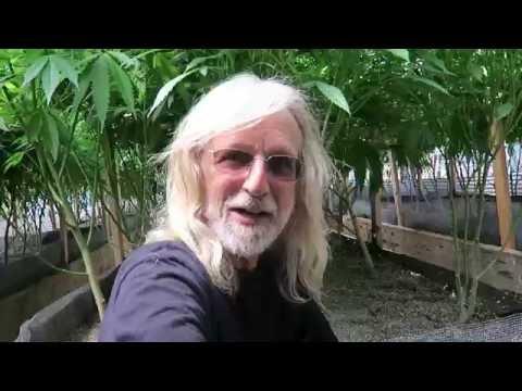 Grow Marijuana: Conley Light Dep Greenhouse