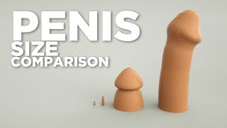 Animal Penises Size Comparison