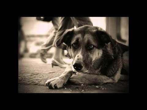 Вопрос: Почему люди бросают собак?
