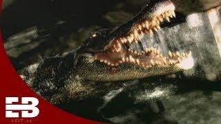 Resident Evil 2 remake: Giant alligator, demo and more - confirmed details