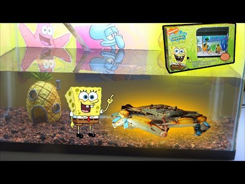 Making a spongebob crab themed tank from scratch.