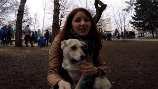 #СелфиНьюс. Выставка бездомных собак в Белгороде