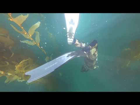 Southern California Spearfishing - The Kelp Chronicles