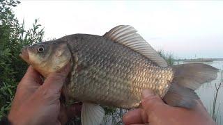 Рыбалка в Беларуси на Лоше Фидер против закидух Эксперименты с прикормом