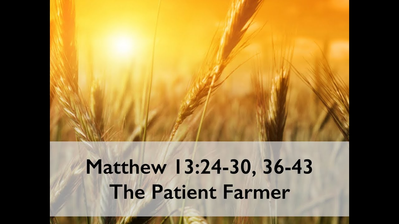 Image result for matthew 13: 24-43 images