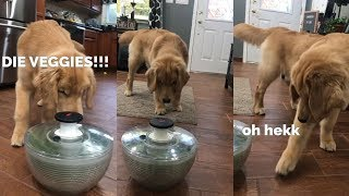 My Dog Reacts to a Salad Spinner