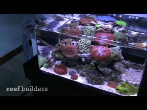 zero edge aquarium by AquaticArt