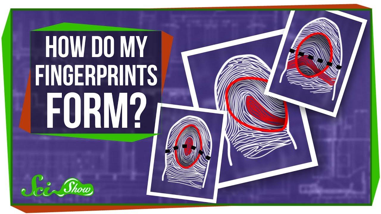 How Do My Fingerprints Form? - YouTube