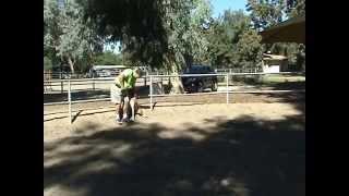Singleton's Rattlesnake Avoidance Training Pt. 3