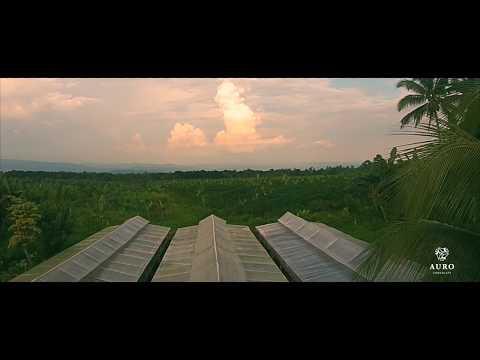Auro Chocolate: Davao Farm