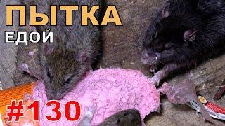"""#130. Реалити Шоу """"ALCARATZ"""". ДОМ 2 - Крысы. Пытка Едой"""