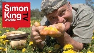 Eating Dandelions with Simon King