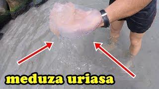 INCREDIBIL CE MEDUZA MARE AM PRINS !! Video