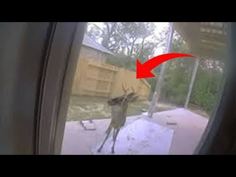 Deer Tries To Show Family Something In Backyard  When They See It, They Call 911