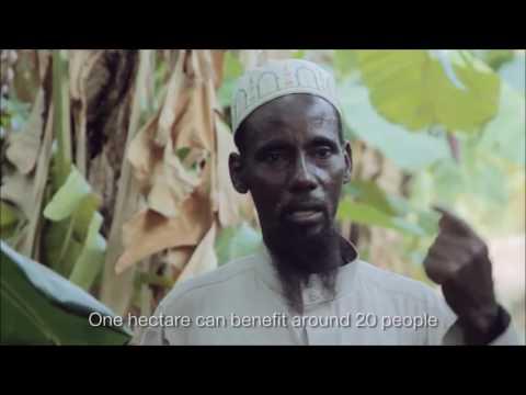 Global One's Islamic Farming - Bond Innovation Award Submission