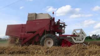 Weizen dreschen mit unseren IHC Mähdrescher 8-41 & 531