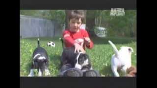 Bull Terrier Ingles -  Abc Canino -  101 Dogs -  EspaÑol