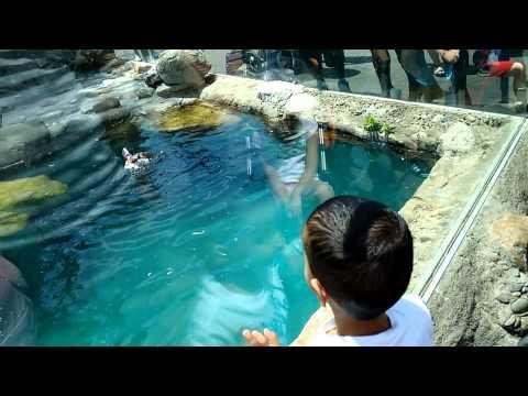 Turtle Back Zoo NJ