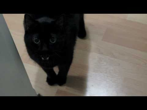 N2 the Talking Cat S1 Ep1 - My Name is N2