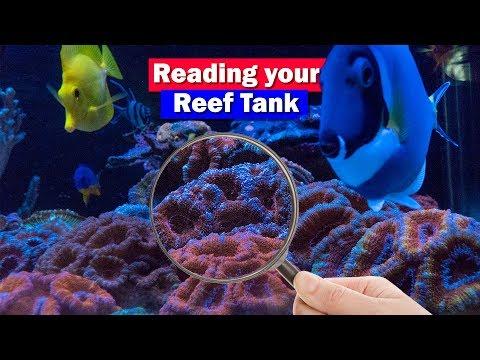Signs Of Water Chemistry Problems In Your Reef Tank