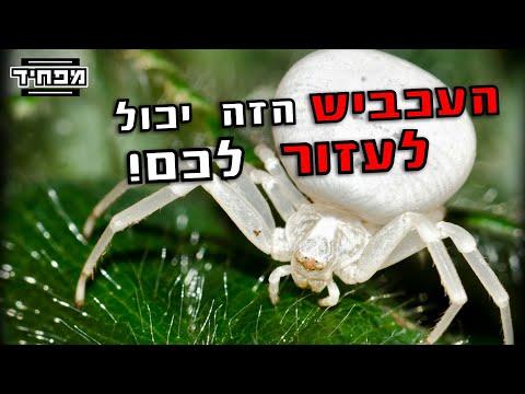 אל תהרגו את העכביש הזה!