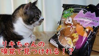 猫の嗅覚で見破る!?ファミマの『パンでロシアンルーレット』☆リキちゃんにパンをクンクンさせてみた【リキちゃんねる 猫動画】Cat video キジトラ猫との暮らし thumbnail