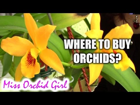 Where to buy orchids? Tips on buying great orchids