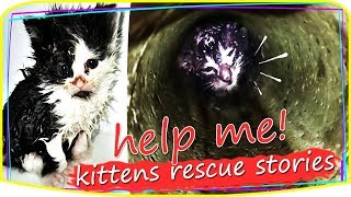 So Touching ! Rescue kitten and Cats Stories  rescued cats before and after