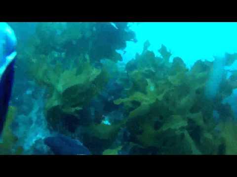 DMT Advanced Open Water  Dive 5 - Part 1 - 20130519