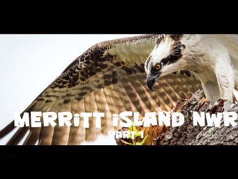Wildlife and bird photography at Merritt Island National Wildlife Refuge, Florida, Ep 1
