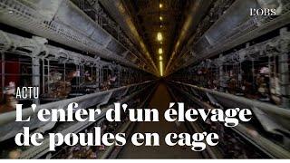 Dans l'enfer d'un élevage de 200 000 poules en cage dans l'Oise, dénoncé par L214