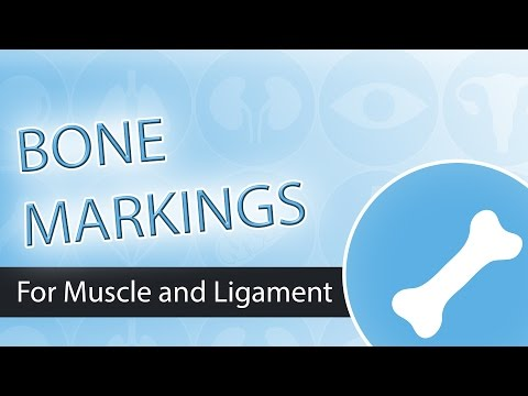 Bone Markings-  Muscle and Ligament Attachment Points