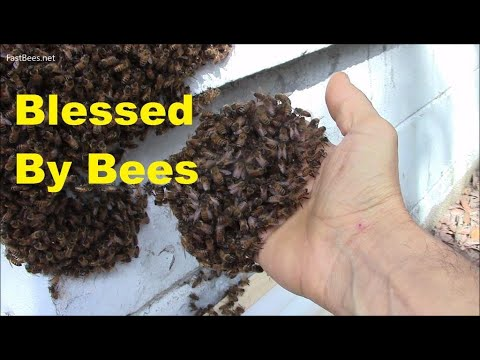 It is a blessing, when honeybees come to your house