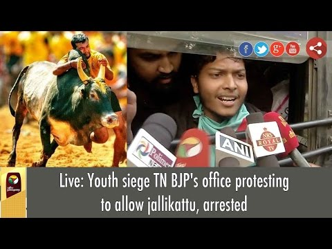 Live: Youth siege TN BJP's office protesting to allow jallikattu, arrested