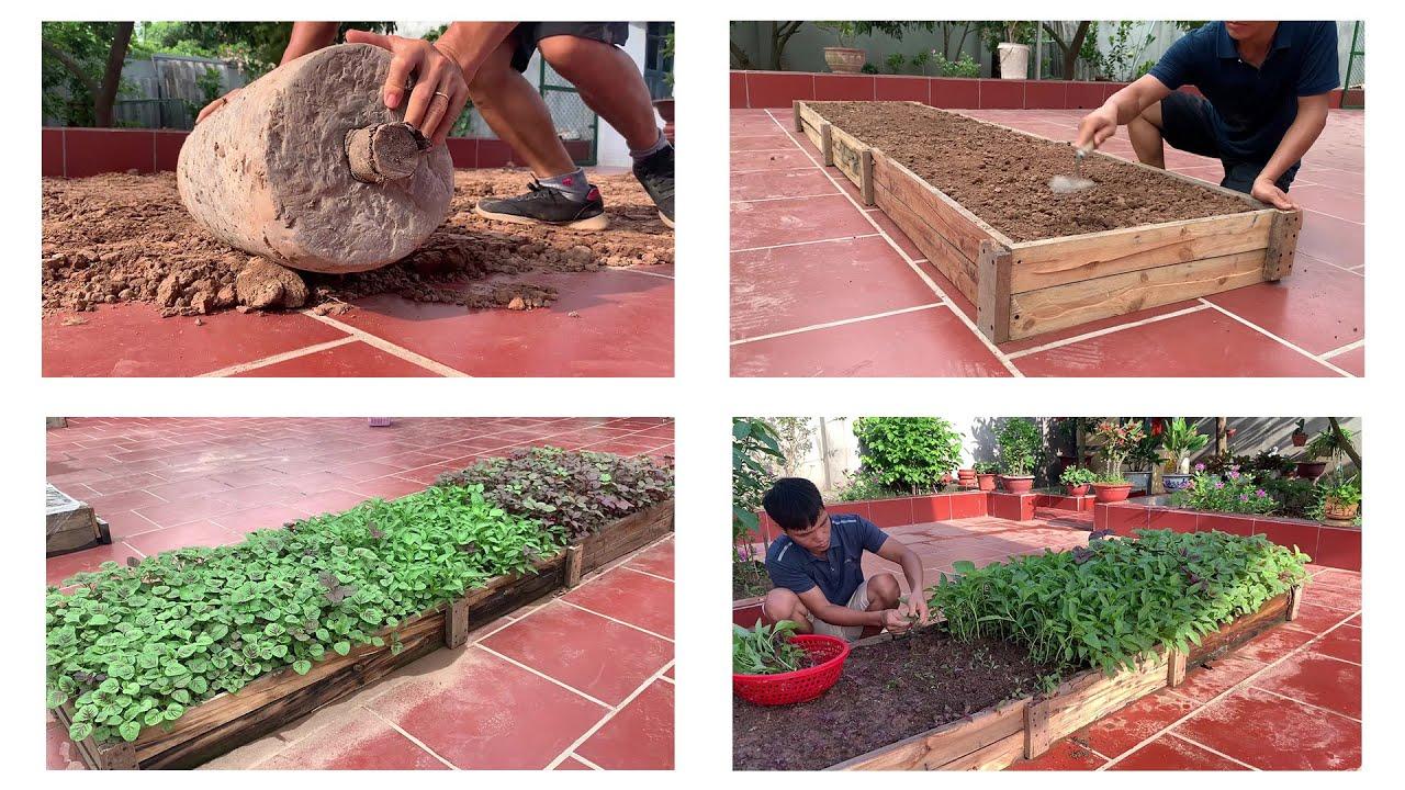 grow amaranth in the yard
