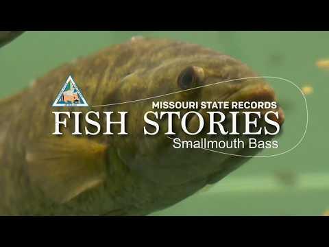Missouri Record Fish Stories - Smallmouth Bass