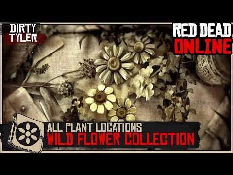wild-american-flower-collection-all-plant-locations-(cycle-1)red-dead-online-rdr2