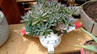 Ideias Com Garrafas Plásticas Para Plantar Flores e Suculentas