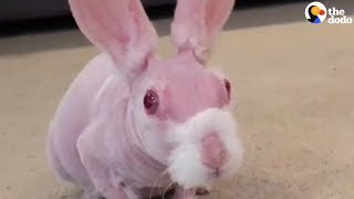 Hairless Bunny Finds Family Who Loves Him | The Dodo