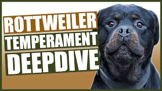 Everything You Need To Know  ROTTWEILER TEMPERAMENT