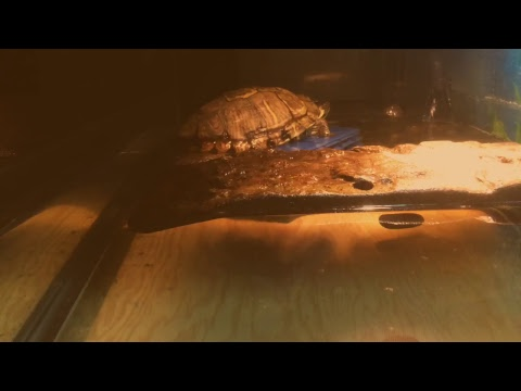 Turtle chillin under the artificial heat-lamp